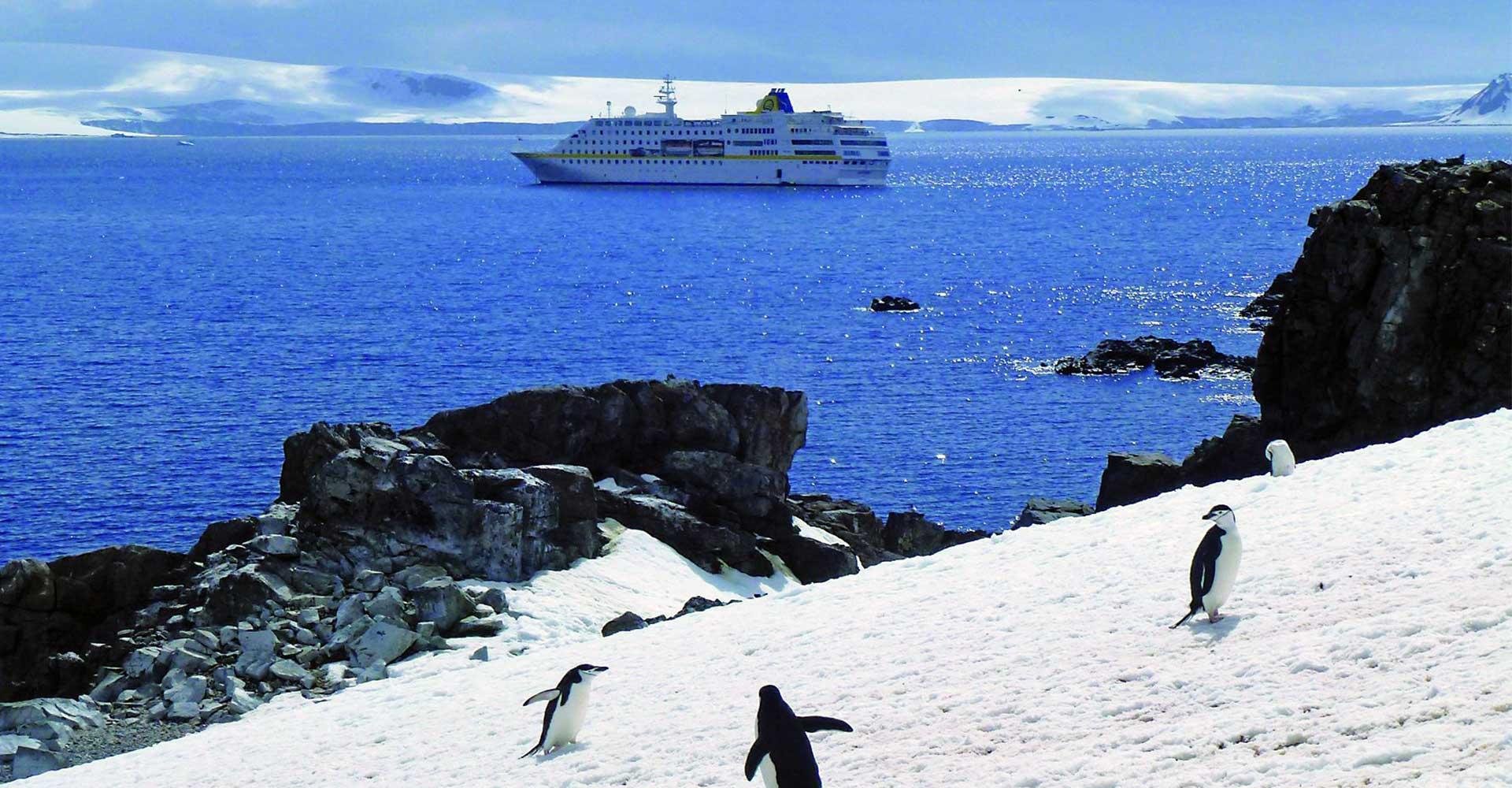 Die Pinguine in der Antarktis staunen über die MS HAMBURG. © PLANTOURS Kreuzfahrten / Maike Tonding